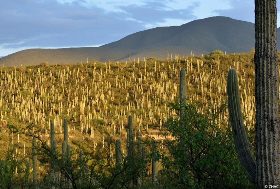 La Unesco declara al Valle de Tehuacán-Cuicatlán Patrimonio de la Humanidad